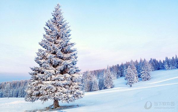 唯美雪景桌面壁纸