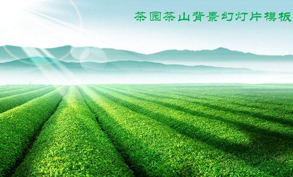 绿色茶山茶庄茶园PPT模板