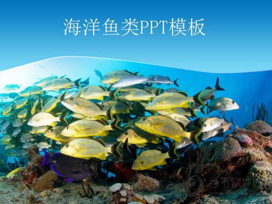 美丽的海底世界PPT模板