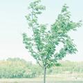 小清新绿色风景win7主题 免费版