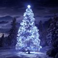 精美圣诞树xp主题 免费版