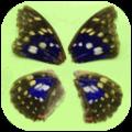 office2picture(文档转图片软件免费版) V1.0 X64 最新免费版