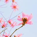 小清新日系摄影xp主题 免费版