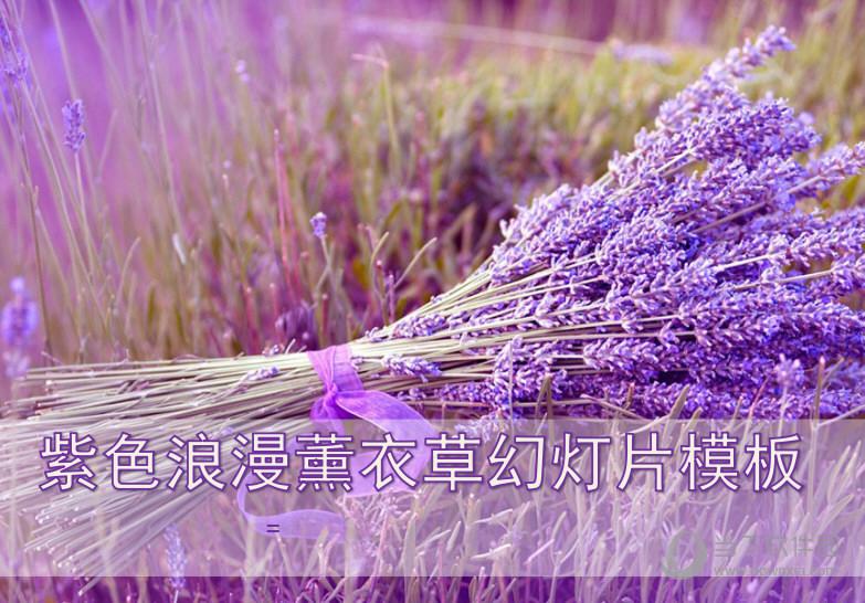 紫色浪漫薰衣草幻灯片模板