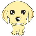 白牙宠物店管理系统 V3.3.1 官方版