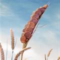 创意麦穗主题PPT模板 免费版