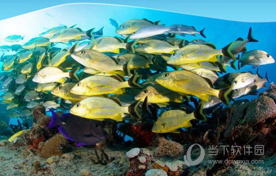 海洋鱼类PPT模板