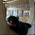 熊本熊搞笑表情包 +9 绿色免费版