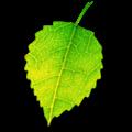 Shade V1.0.2 Mac版 [db:软件版本]免费版