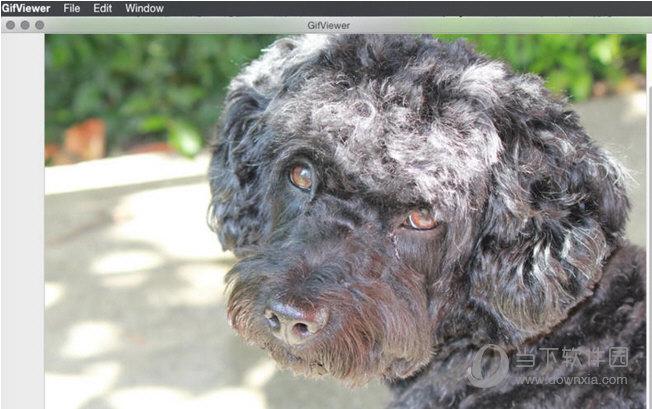 GifViewer MAC版