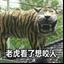 印尼笑面虎表情包 +18 最新免费版