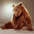 熊熊归来 V1.0 安卓版