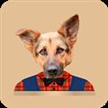 狗头贴 V1.0 安卓版