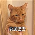 联络聊天 qq 表情 > 猫咪委屈粑粑表情包  9 绿色免费版   软件大小图片