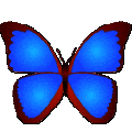 bkViewerWin7Win10专用版 V5.0e 绿色免费版