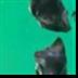 无人深空太空梦想MOD V2.0 绿色免费版
