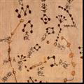 群星随机中文命名MOD 免费版