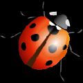 七星虫种子搜索神器 V1.0 免费版