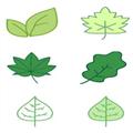 可爱小树叶图标 免费版