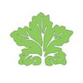 绿色捕手 V1.1 安卓版