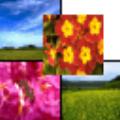 Youfeng Photocomposer(图像排版软件) V1.2 绿色版