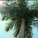 TreeStorm for 3dsmax(3DMAX树木植被插件) V5.6.0.1 中文版