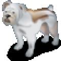 南方狗年运程破解版 V2018 免费版