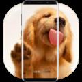 狗舔屏幕动态壁纸 V1.1.21 安卓版