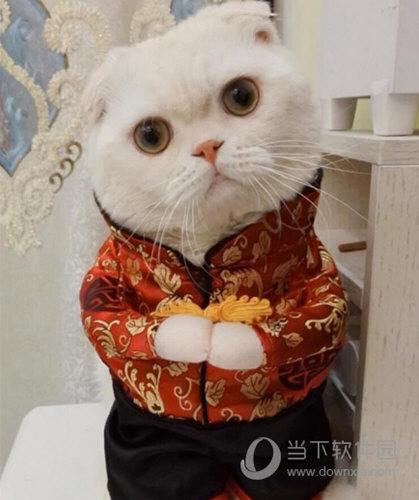 让你的手机壁纸更可爱   抖音里有很多可爱的小动物,刘二豆这只小猫