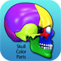 Skull Color Parts(解刨医学应用) V1.0 Mac版