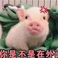 你是不是外面有猪了表情包 +10 绿色免费版