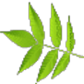x2m decoder(x2m文件解密工具) V1.0.1 绿色免费版