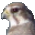 Falco Icon Studio(图标制作软件) V8.3 官方版