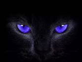 苹果手机怎么设置猫眼壁纸 黑猫睁眼壁纸来了