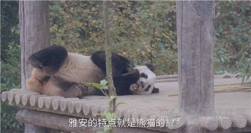 《仙剑奇侠传》雅安市熊猫