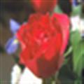 libjpeg(开源jpeg图像库) V2019 官方版