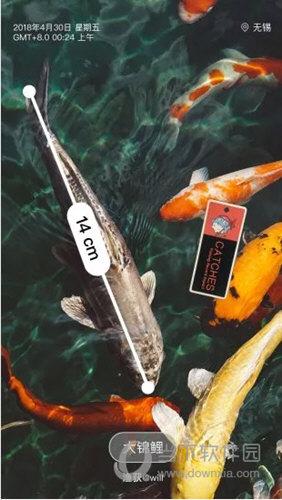 渔获APP