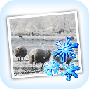 Snow Daze(照片雪景特效软件) V1.20 官方版