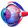 Eye Anatomy 3D(医学软件) V1.0 Mac版