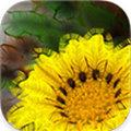 WoolImager(艺术设计软件) V1.1 Mac版