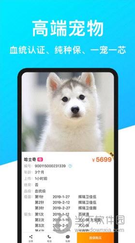 宠物市场安卓版