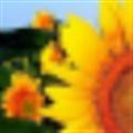 向日葵排课软件破解版 V3.7.0 最新免费版