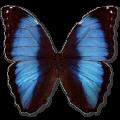 无名轻博客系统 V4.0 PHP版