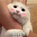 可爱猫咪撒娇表情包 +9 免费版