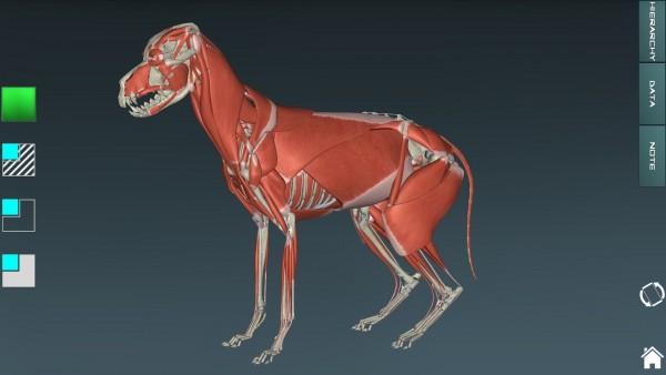 人体解剖学图集APP破解版 V3.9.8 安卓免费版截图2