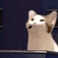 POPCAT表情包 +13 动图版