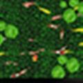 荷花池鱼地面互动 V2.0.1 官方版