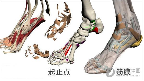 3dbody解剖